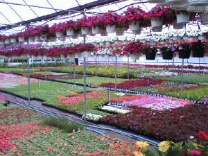 Woodside Nursery & Garden Ctr - Patchogue, NY