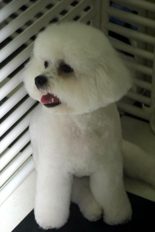 Dog Grooming Lexington Ma