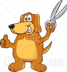 Hollywood Dog Grooming Swedesboro Nj