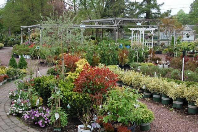 Hyams Landscaping And Garden Center : Hammett s landscaping garden center forked river nj