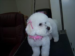 Shear Magic Pet Grooming - Springboro, OH