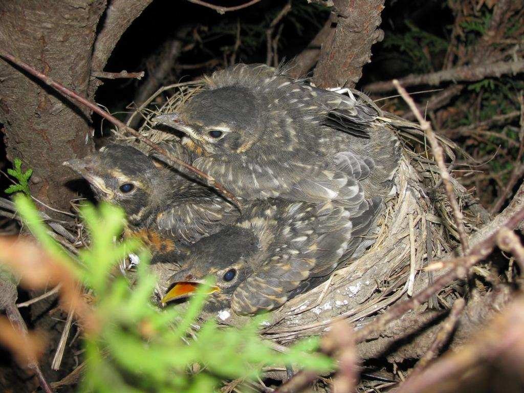 3 Baby Birds by Vicki Zerbee, Social Media Consultant & Shaklee Independent Distributor