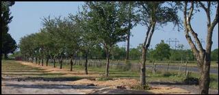 Wagner Tree Farm - Homestead Business Directory
