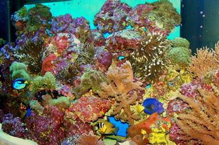 Aquariums By Sissy - Homestead Business Directory