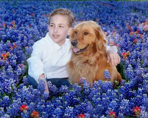 Pet Doctor - Rockwall, TX