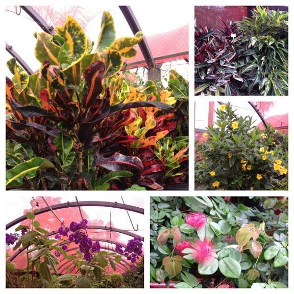 Yard Stop Garden Center Mount Dora Fl 32757 352 357 9964