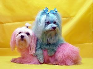 Bark Avenue Pet Salon - Villa Rica, GA