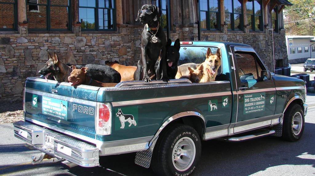 Dog Boarding Blue Ridge Ga