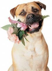 Με ένα λουλούδι δείχνω την αγάπη μου...