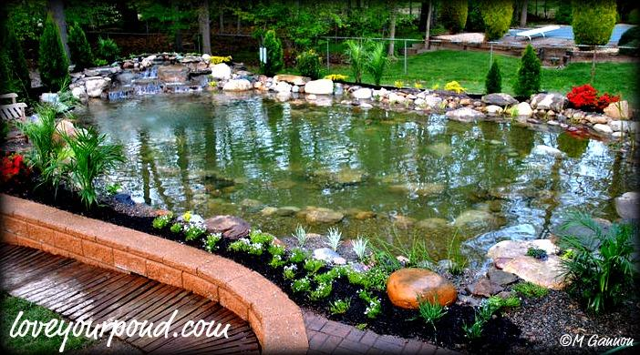 Pictures for full service aquatics in summit nj 07901 for Above ground koi fish pond