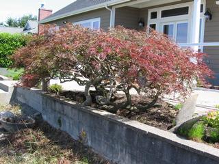Thundering Oak Enterprises - Auburn, WA
