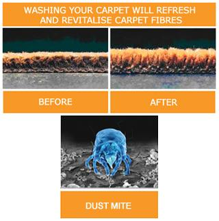 pictures for ideal carpet care inc in kissimmee fl 34744