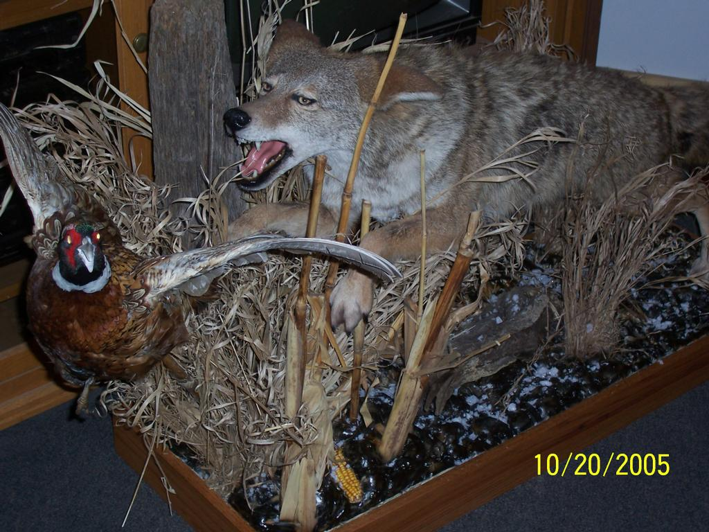 Wildlife re creations taxidermy pine city mn 55063 320 for Fish taxidermy near me