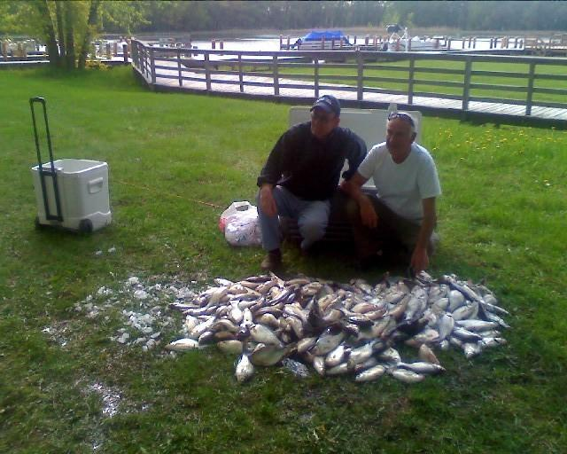 White bass may08 from wolf river outfitters in fremont wi for Wolf river fremont fishing report
