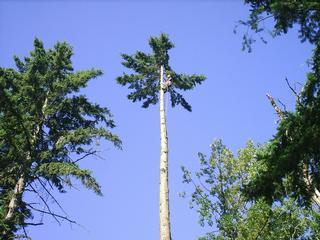 Blooma Tree Experts LLC - Seattle, WA
