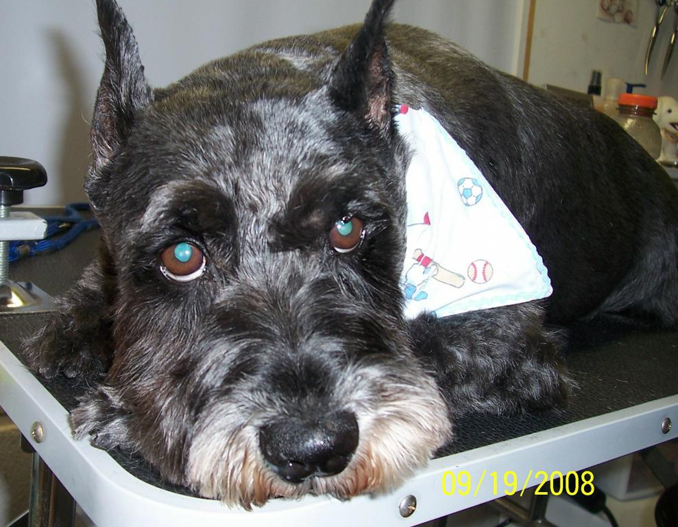 Outback Dog Grooming Milton Fl 32571 850 390 3869