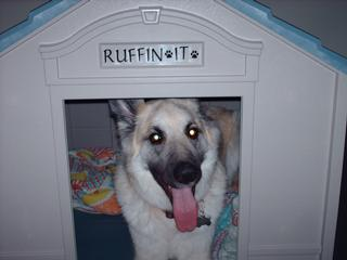 Ruffing It Doggie Day Care & Overnight Center - Grand Forks, ND