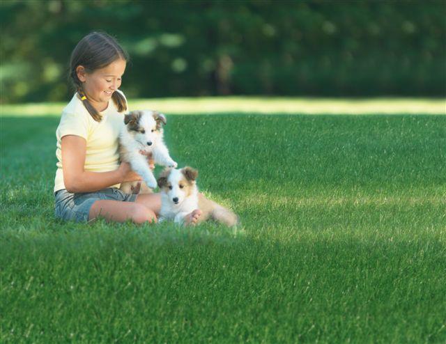 St Louis Dog Fence O Fallon Mo 63368 636 537 1716