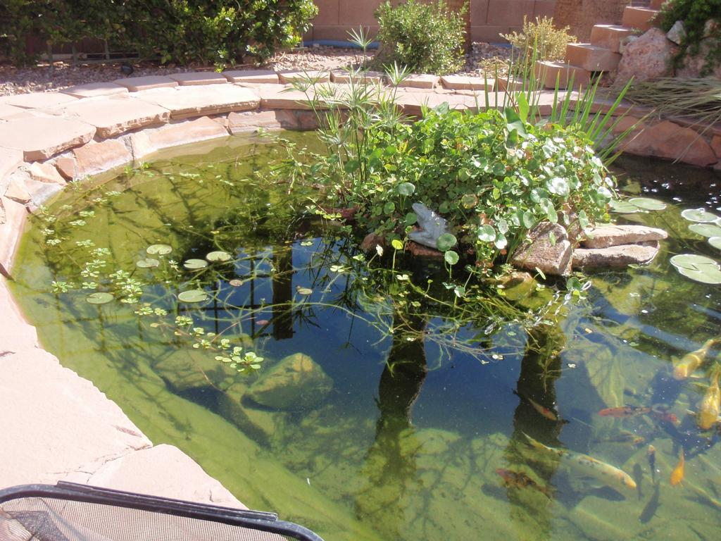 Las vegas pond company repairs maintenance service for Pond maintenance companies