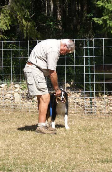Dog Training Shelton Wa