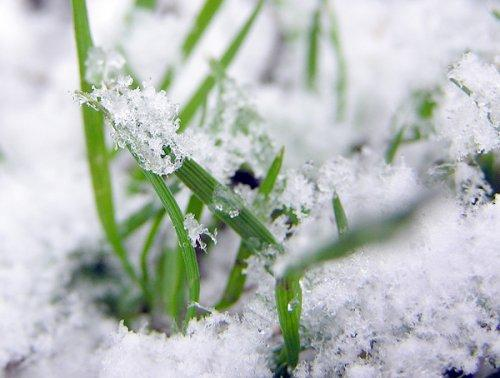 snow-grass 2.jpg provided by DeTerra's Landscape Design Dartmouth 02747