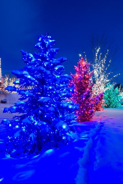 Pretty Decorative Lights Lights Winter Pretty Esp