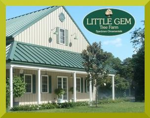 Little Gem Tree Farm - Saint Helena Island, SC