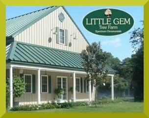 Little Gem Tree Farm - Saint Helena Island, SC