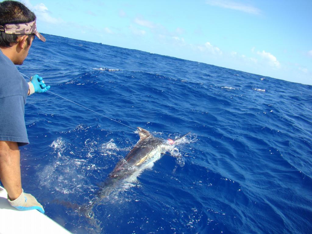 Dsc02799 from deep sea fishing kauai in kapaa hi 96746 for Deep sea fishing hawaii