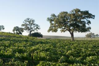 Sextant Wines - San Luis Obispo, CA
