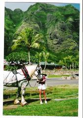Honolulu Horse & Carriage Ltd - Waianae, HI