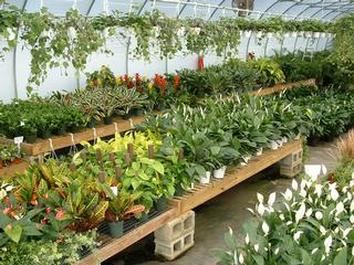 Reese's Plants - Blythewood, SC