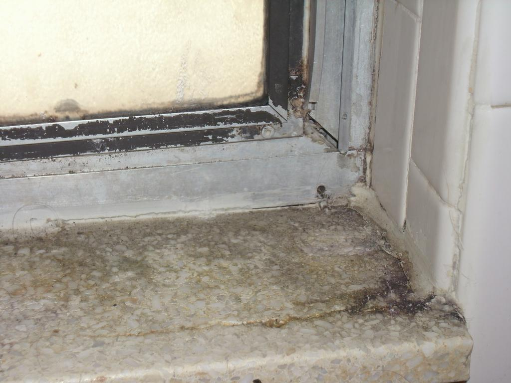 black mold bathroom - 28 images - black mold or mildew in ...