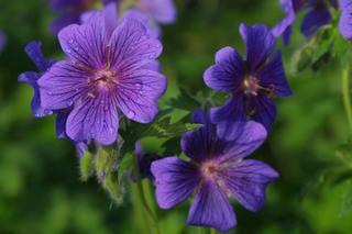 All Seasons Garden & Floral - Sandpoint, ID