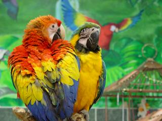 Angels Bird Jungle - Shrewsbury, NJ