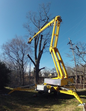 Arbor Tree Experts, LLC - Jackson, NJ - yelp.com