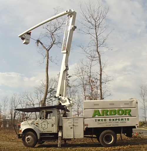 Arbor Tree Experts - Home | Facebook