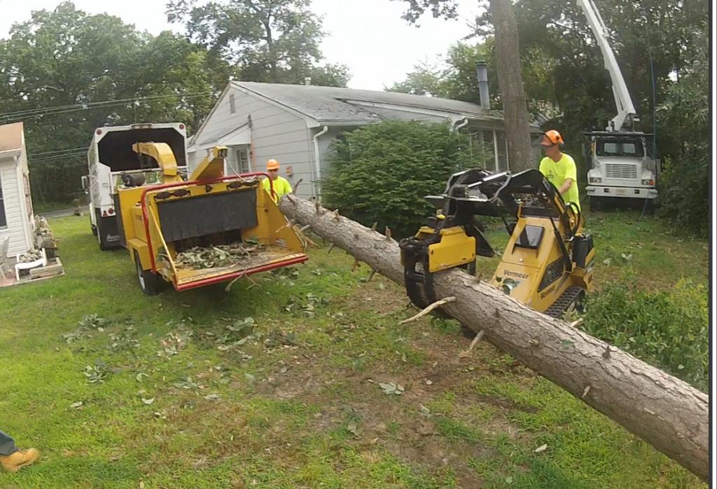 Arbor Tree Experts in Jackson, NJ - Tree & Shrub ...