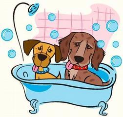 Centereach Dog Grooming