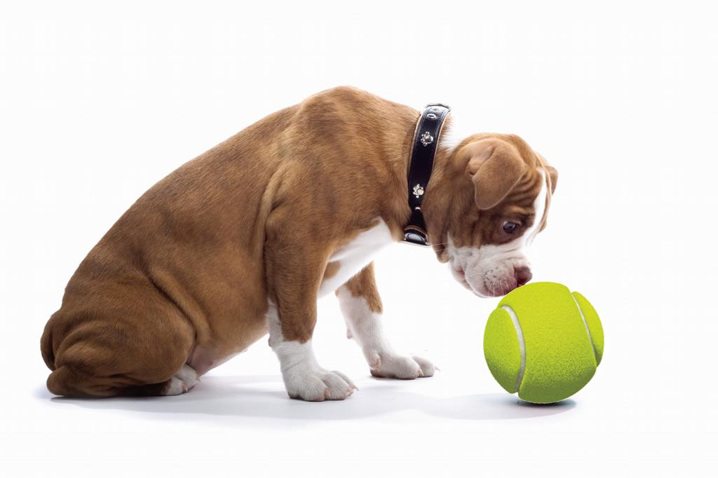 Limitless dog training temecula temecula ca 92591 for A cut above pet salon