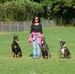Dog Training Billerica Ma