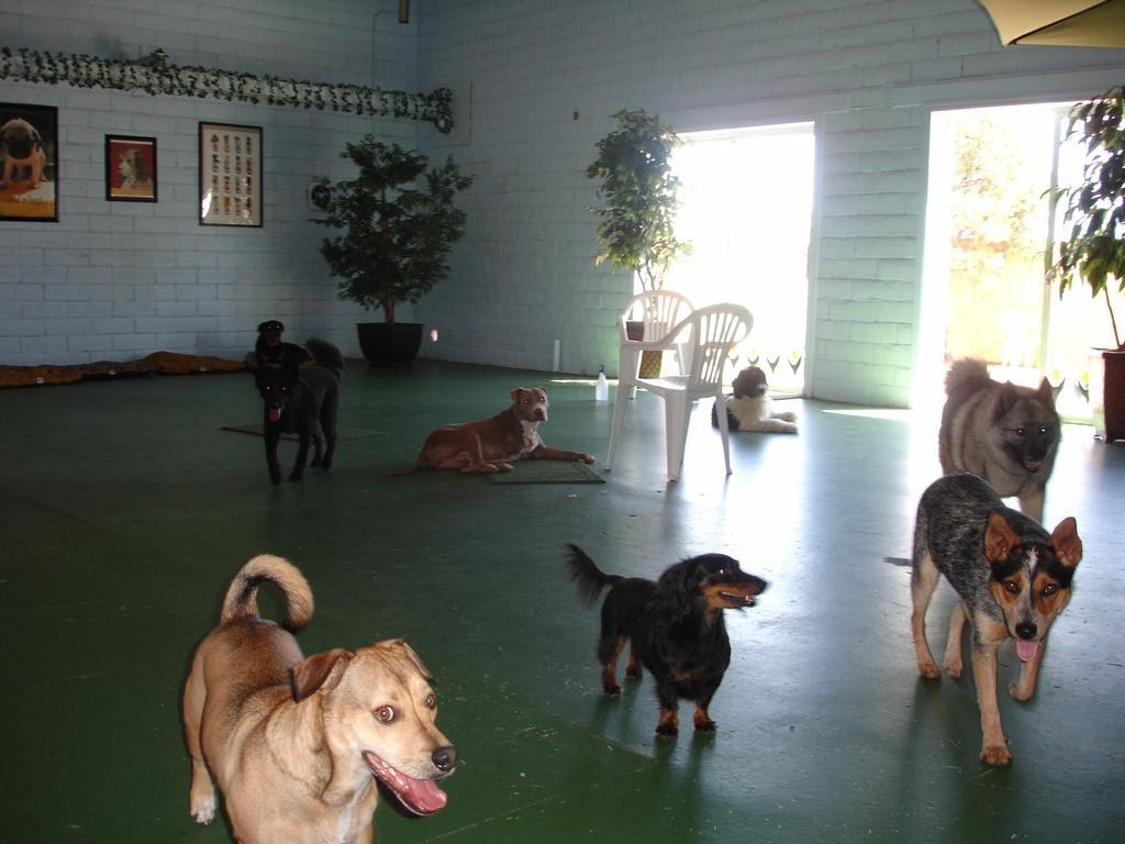 Dog Days Doggie Day Care Rio Rancho Nm