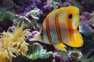 1000 Images About Aquariums On Pinterest