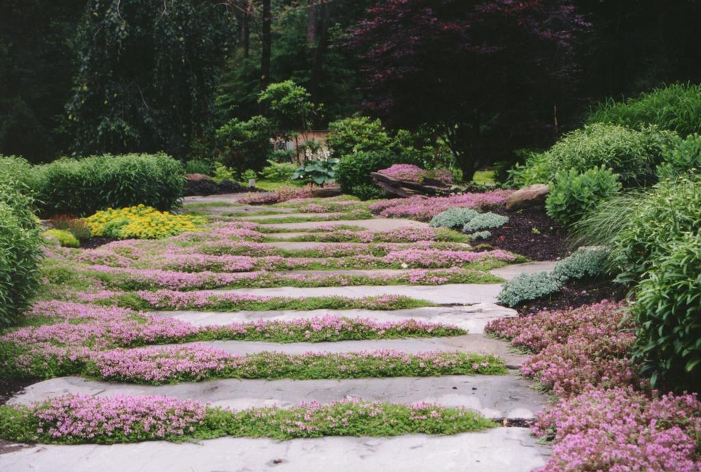 Picture: Natural garden pathway, landscaping and garden design 11 ...