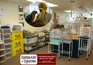 Birdlady Of Easton Llc - Easton, PA