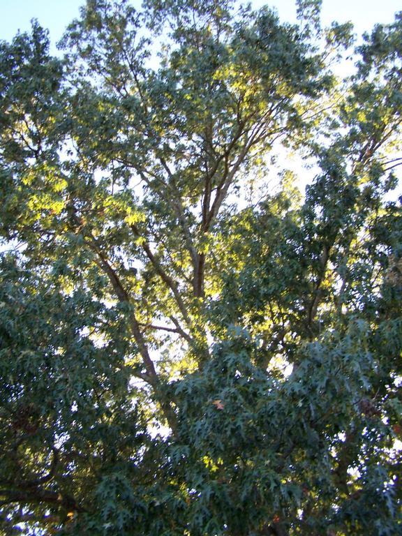 aaa tree service lufkin tx 75904 936 635 9653. Black Bedroom Furniture Sets. Home Design Ideas
