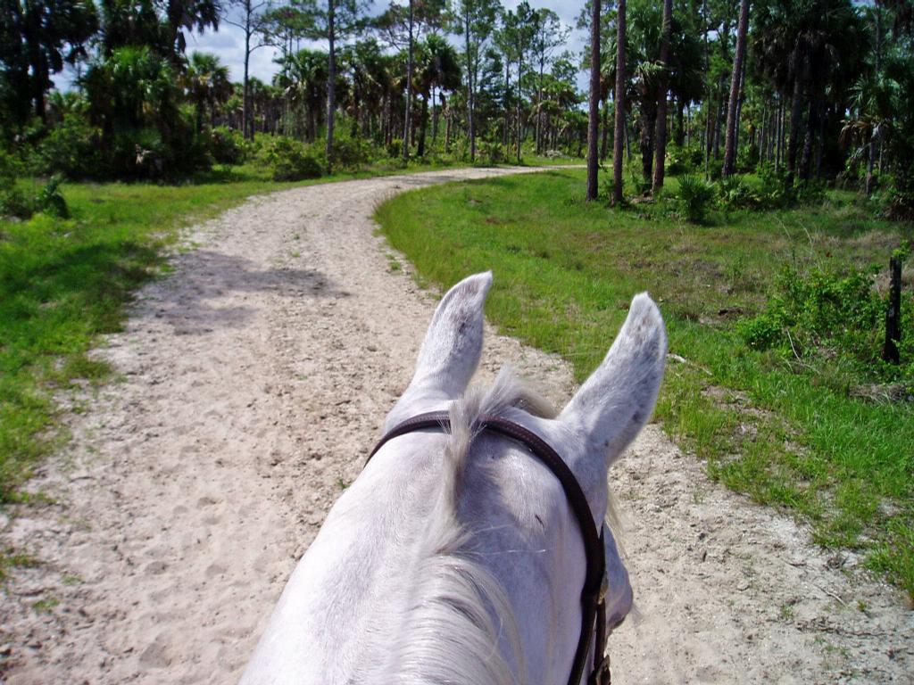 Jupiter Equestrian Center Home Of Sandi Trails Gift