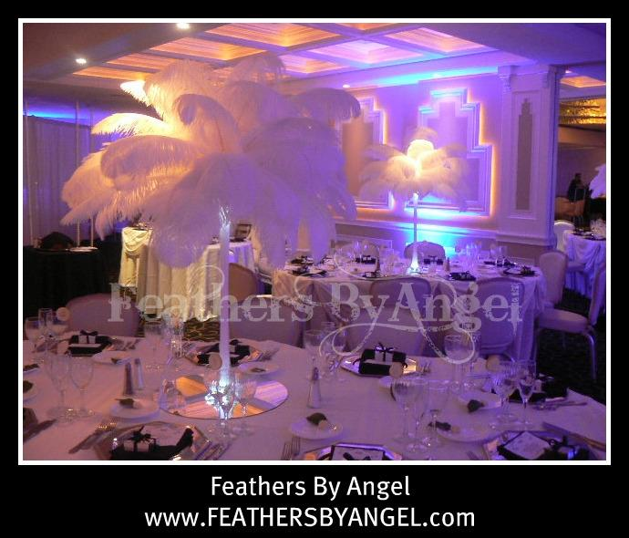Pictures for feathers by angel in twinsburg oh
