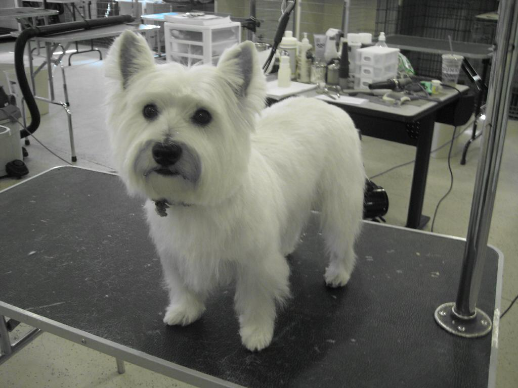 Pictures for green dog grooming spa and dog wash in york for Dog grooming salons near me