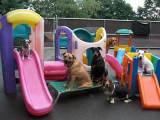 The Barking Lot Hamden Ct 06514 203 764 2622 Dog